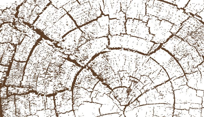 Innovationen für die Holzwirtschaft: Jetzt Förderung beantragen